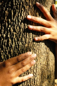 Hands on a tree
