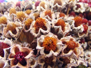Closeup of flowers open for seeding