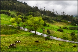 Typical Colombian landscape on a rainy day. Photo by Pedro Szekely on Flickr.com